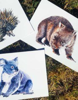 Native Australian Fauna